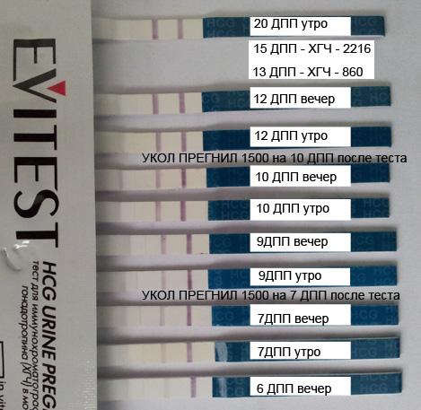 6 дпп тест на беременность