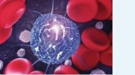 Сперматозоиды из стволовых клеток кожи