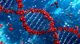 Ликбез по ДНК