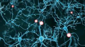 Стволовые клетки могут вылечить эректильную дисфункцию