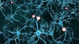 Предложен новый метод стимуляции сперматогенеза