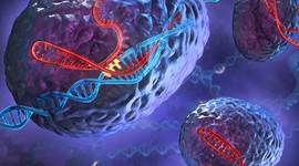 Выявлен новый ген, влияющий на развитие бесплодия