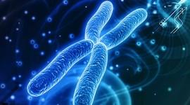 Найден новый ген мужского бесплодия