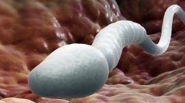 Выведена формула идеальной спермы