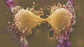 Обнаружен новый способ повысить мужскую фертильность