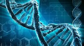 «Ответственность» генов за развитие наследственных болезней преувеличена