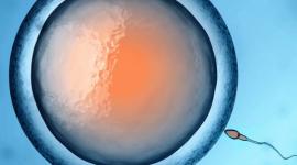 В Японии впервые родился ребенок после анонимного донорства яйцеклетки