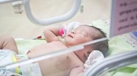 В Подмосковье часто рождаются дети из пробирки