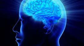 Ученые объяснили, в чем отличие действия окситоцина на мозг мужчин и женщин