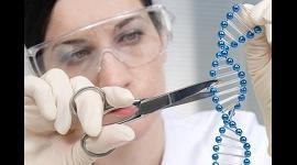 В США собираются создать комиссию по вопросам модификации ДНК