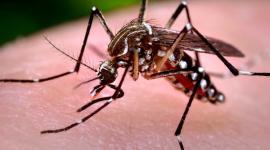 Вирус Зика может вызвать мужское бесплодие