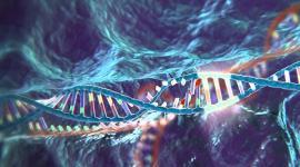 Проведено редактирование генома человеческих эмбрионов