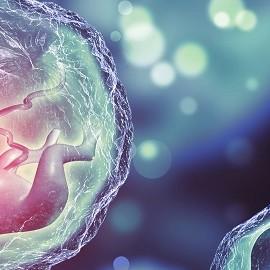 Судьба эмбрионов, оставшихся после ЭКО