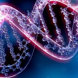 Преимплантационное генетическое тестирование (ПГТ) – что это такое?