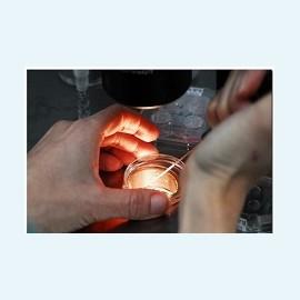 Перенос одного эмбриона при ЭКО