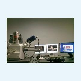 Процесс оплодотворения яйцеклетки снимут на видео
