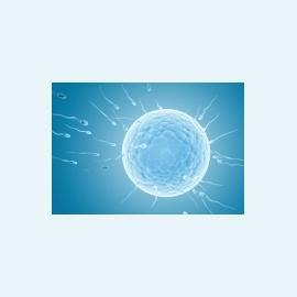 Успешность криоконсервации яйцеклеток зависит от возраста пациентки?