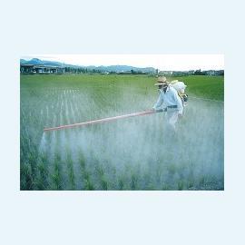 Овощи, обрабатываемые пестицидами,  ухудшают качество спермы