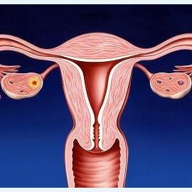 Цервикальный канал шейки матки