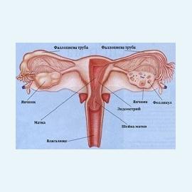 Эндометрит, его развитие в результате инфицирования раневой поверхности