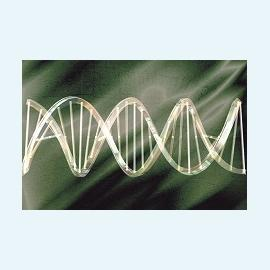 Полимеразная цепная реакция и ее применение в медицине