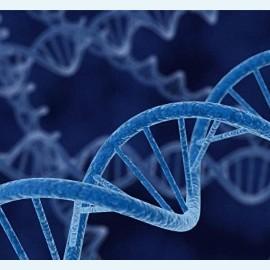 Вредные привычки отца передаются детям на генетическом уровне
