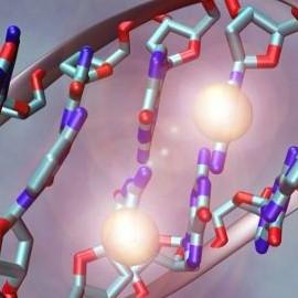 10 интересных фактов о ДНК