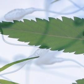 Марихуана ухудшает качество спермы
