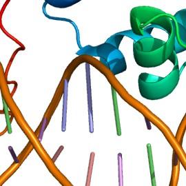 Найден ключевой ген успешной беременности