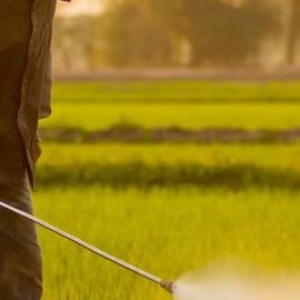 Проблемы с мужской фертильностью могут быть связаны с воздействием пестицидов