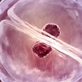 Названы факторы риска многоплодной беременности после ЭКО