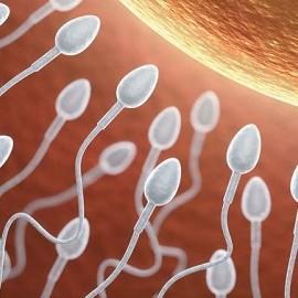 Качество спермы выше весной и осенью