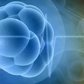 Стволовые клетки защитят от ранней менопаузы