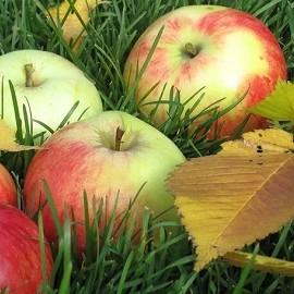 Яблоко в день защитит от симптомов менопаузы