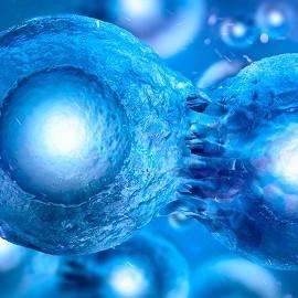 Успех зачатия зависит от костного мозга