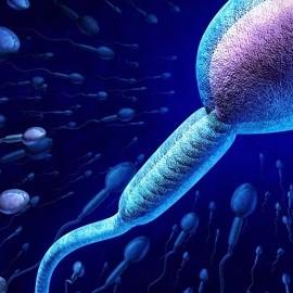 Предложен метод отбора Х и Y сперматозоидов