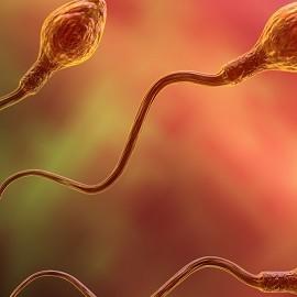 Пандемия влияет на репродуктивную функцию мужчин