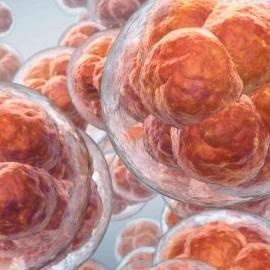 Искусственный интеллект научили распознавать хорошие эмбрионы