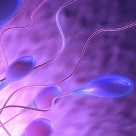 Дефекты спермы становятся причиной выкидыша