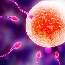 Перенос свежих эмбрионов дает лучшие результаты ЭКО
