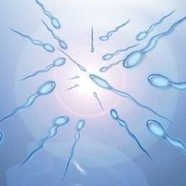Качество спермы: хочет ли знать мужчина?