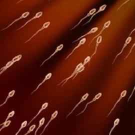 Найден новый метод оценки качества спермы