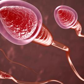 Как на самом деле плавают сперматозоиды?