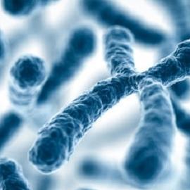 Женская хромосома может быть в ответе за мужское бесплодие