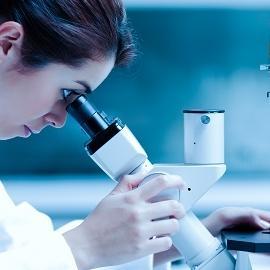Эмбрион может быть выращен «в пробирке»