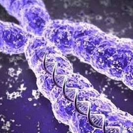 Мужское бесплодие связано с Х-хромосомой