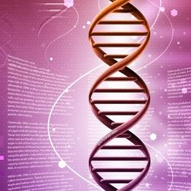 Британским ученым разрешили редактировать гены эмбриона
