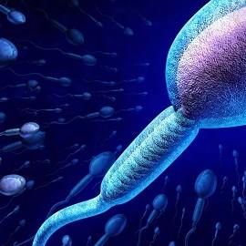 Коронавирус обнаружен в сперме пациентов
