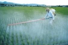 Пестициды вредят мужскому здоровью: новое исследование