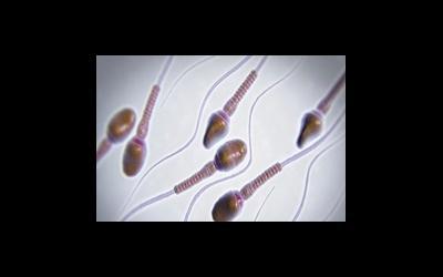 Репродуктивная функция у мужчин и женщин